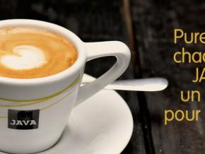 l'union-centrale-des-coopératives-agricoles-de-l'ouest-teste-la-variété-de-café-java-au-cameroun
