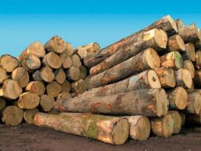bois-les-exportations-camerounaises-vers-l-union-europeenne-ont-chute-de-21-sur-une-periode-de-onze-mois