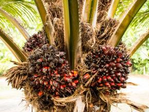 cameroun-le-projet-de-developpement-des-chaines-de-valeurs-agricoles-fait-les-yeux-doux-aux-producteurs-de-la-region-de-l-est