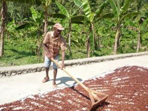 au-cameroun-le-cicc-se-satisfait-du-premier-bilan-de-son-programme-d'appui-à-l'organisation-de-la-commercialisation-du-cacao