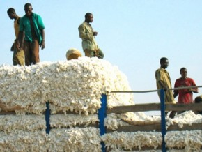 cameroun-la-sodecoton-a-besoin-d-investissements-estimes-a-40-milliards-de-fcfa-pour-tourner-a-plein-regime