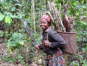 le-cameroun-s-engage-a-restaurer-12-millions-d-hectares-de-forets-deboises-a-l-horizon-2030