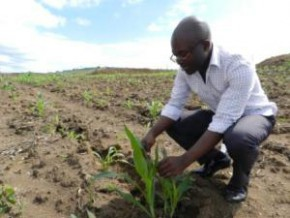 deja-3300-hectares-amenages-pour-installer-de-jeunes-agriculteurs-au-cameroun
