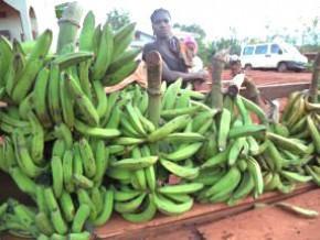 l-union-europeenne-soutient-la-lutte-contre-l-insecurite-alimentaire-dans-la-region-de-l-est-cameroun