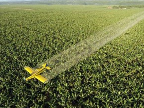 l'agro-industriel-cdc-2ème-employeur-du-cameroun-doit-replanter-plus-de-50-de-ses-plantations