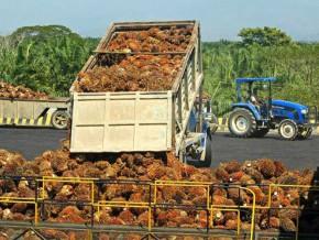 cameroun-pamol-se-dotera-d'une-unité-de-production-d'huile-de-palme-de-30-tm-par-heure