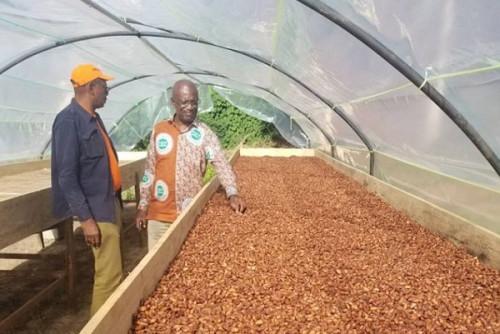 Pour la première fois depuis plus d'un an, le prix moyen du kg du cacao camerounais descend sous la barre de 1000 FCFA