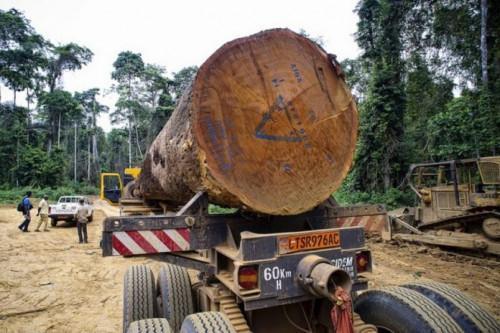 Les importations de bois sciés de l'UE chutent de 6% au premier trimestre 2018, plombées par la baisse des expéditions camerounaises