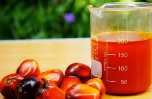 Cemac: l'huile de palme (+54%) et le café (+43%) accélèrent les cours des exportations agricoles au 1er trimestre2021