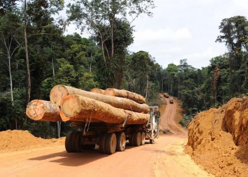 Pour le groupe français Rougier, c'est le Cameroun qui a précipité sa faillite