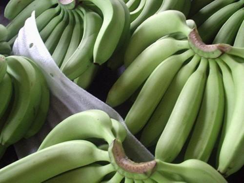 Cameroun : les exportations de banane ont chuté de 19 461 tonnes au 1er trimestre 2018, plombées par la contre-performance de la CDC