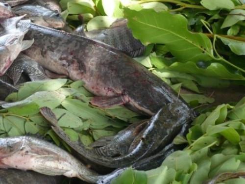 Du poisson local arrive sur les étals des supermarchés au Cameroun