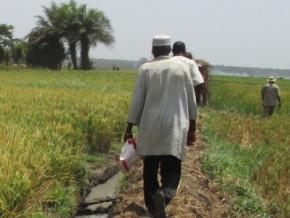la-societe-indienne-shapoorji-pallonji-prospecte-dans-l-extreme-nord-du-cameroun-pour-un-projet-de-production-du-riz-sur-10-000-hectares