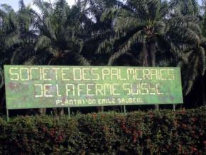 la-societe-des-palmeraies-de-la-ferme-suisse-au-cameroun-a-degage-un-benefice-de-123-millions-fcfa-en-2017