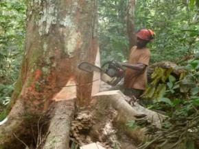 l-ong-greenpeace-epingle-dans-un-rapport-la-societe-singapourienne-halcyon-agri-et-sa-filiale-camerounaise-sudcam