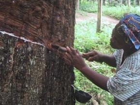 corrie-maccoll-veut-investir-15-milliards-de-fcfa-dans-l-autonomisation-de-13-000-producteurs-ruraux-d-hevea-au-cameroun