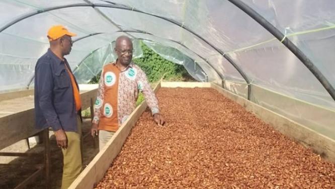 pour-la-premiere-fois-depuis-un-mois-et-demi-le-prix-du-cacao-camerounais-enregistre-une-nouvelle-decote