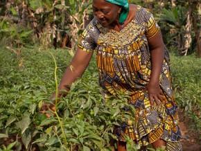 pour-moderniser-le-secteur-le-cameroun-prepare-la-creation-de-l-agence-nationale-du-conseil-agropastoral