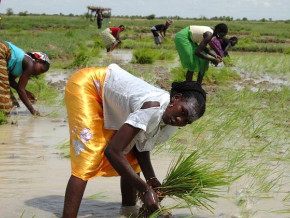 les-importations-alimentaires-de-la-cemac-pesent-3000-milliards-de-fcfa-par-an-selon-daniel-ona-ondo