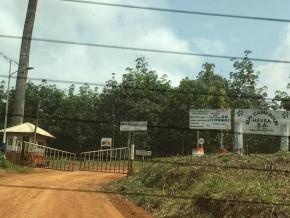 greenpeace-denonce-le-pret-de-14-5-milliards-fcfa-de-la-deutsche-bank-a-halcyon-promoteur-de-sud-cameroun-hevea