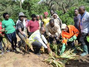 le-projet-d-agriculture-bio-de-mombo-dans-le-littoral-cameroun-soutenu-par-semc-livre-sa-production-en-2020