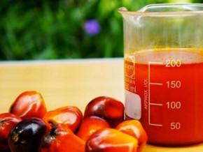 cemac-l-huile-de-palme-54-et-le-cafe-43-accelerent-les-cours-des-exportations-agricoles-au-1er-trimestre-2021