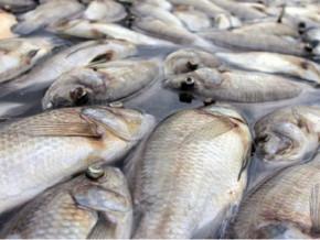 le-cameroun-revendique-une-production-de-289-764-tonnes-de-poissons-a-fin-octobre-2019