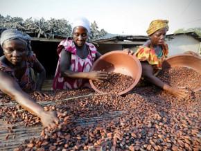 l-interprofession-cacao-cafe-lance-une-initiative-pour-procurer-des-revenus-aux-femmes-rurales-grace-a-la-cacaoulture