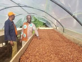 le-prix-du-kilogramme-de-cacao-decroche-au-cameroun-de-50-fcfa-pour-la-2e-fois-en-10-jours