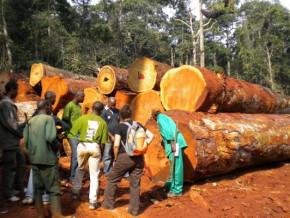 taxe-d-abattage-les-forestiers-du-cameroun-plaident-pour-une-reduction-de-1-5-afin-d-amortir-le-choc-du-covid-19