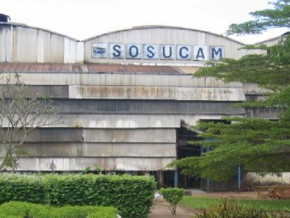 sosucam-leader-du-marche-du-sucre-au-cameroun-fait-une-offre-d-achat-d-actions-a-ses-salaries