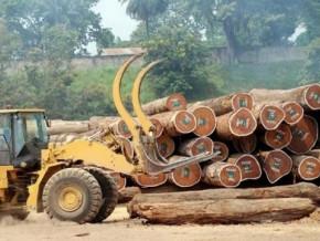 covid-19-apres-une-chute-de-2-4-en-2019-l-exploitation-forestiere-au-cameroun-devrait-plonger-de-6-4-en-2020
