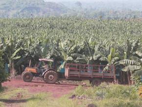 compagnie-fruitiere-recherche-un-fournisseur-de-12-tracteurs-agricoles-pour-ses-plantations-de-bananes-au-cameroun