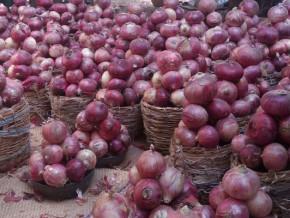 grace-au-fida-le-cameroun-vise-une-production-de-200-000-tonnes-d-oignons-en-2020