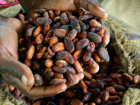 l-indonesie-a-besoin-du-cacao-et-du-coton-camerounais-selon-le-vice-directeur-de-l-indonesian-trade-promotion-center