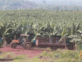 la-fao-cherche-des-ressources-pour-transformer-le-monde-rural-et-developper-l-agro-industrie-en-afrique-centrale