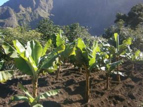cacao-banane-plantain-huile-de-palme-plus-de-450-000-plants-a-distribuer-aux-producteurs-de-la-region-du-littoral