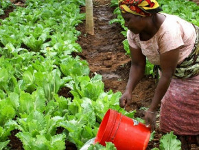 le-cameroun-prepare-une-loi-sur-l-agriculture-biologique