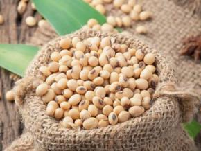 le-cameroun-depense-chaque-annee-14-milliards-de-fcfa-dans-l-importation-du-soja