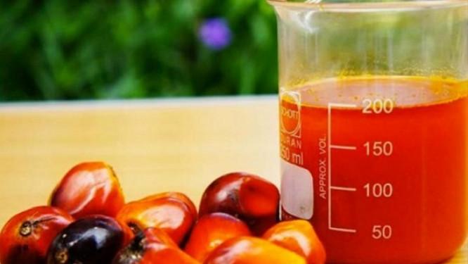 cemac-le-caoutchouc-et-l-huile-de-palme-affichent-la-meilleure-progression-des-cours-mondiaux-au-3e-trimestre-2020