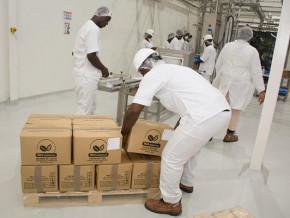 en-depit-de-l-arrivee-d-un-nouvel-operateur-la-transformation-du-cacao-au-cameroun-chute-de-24-000-tonnes-en-2019-2020