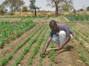 dans-la-region-de-l-est-du-cameroun-le-pam-autonomise-les-populations-vulnerables-par-la-creation-des-plantations-et-des-etangs