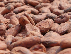 cacao-la-france-les-usa-sortent-de-la-liste-des-clients-du-cameroun-au-profit-de-la-coree-l-albanie