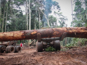 le-cameroun-rejoint-la-plateforme-open-timber-portal-qui-promeut-la-legalite-dans-la-filiere-bois