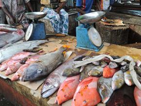 le-nigeria-siphonne-entre-70-et-80-du-poisson-peche-sur-le-fleuve-benoue-dans-la-region-du-nord-du-cameroun