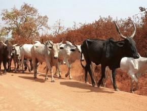l-ue-injecte-12-milliards-de-fcfa-pour-soutenir-des-producteurs-agropastoraux-dans-le-septentrion-du-cameroun