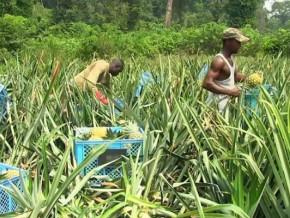 plan-triennal-special-jeunes-l-agro-industrie-l-elevage-et-l-economie-numerique-attirent-les-jeunes