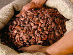 cameroun-telcar-cocoa-negociant-de-l-americain-cargill-distribue-a-nouveau-2-2-milliards-fcfa-de-primes-aux-producteurs-de-cacao-certifies