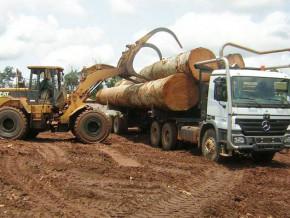 cameroun-hausse-de-5-des-exportations-de-bois-scie-vers-l-union-europeenne-en-2018-a-253-400-tonnes