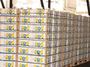 le-cameroun-a-exporte-16-135-tonnes-de-bananes-en-mai-2019-en-baisse-de-pres-de-3000-tonnes-en-glissement-annuel